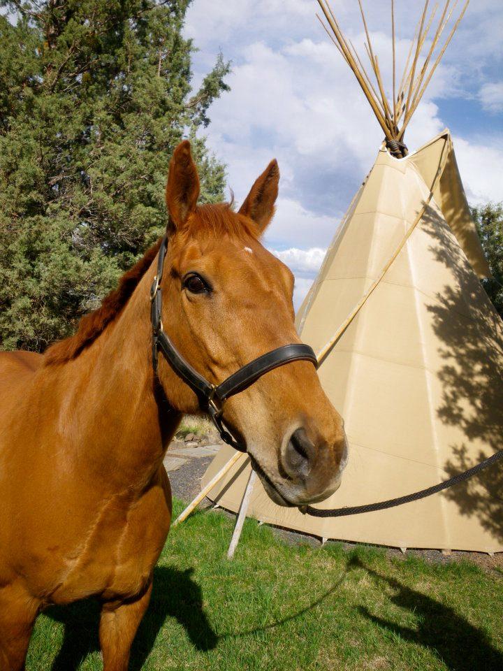 horse-by-teepee.jpg