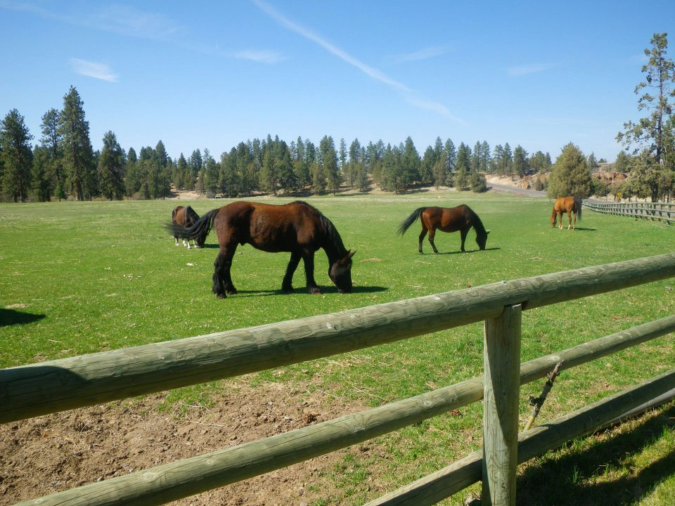 horses-in-field.jpg