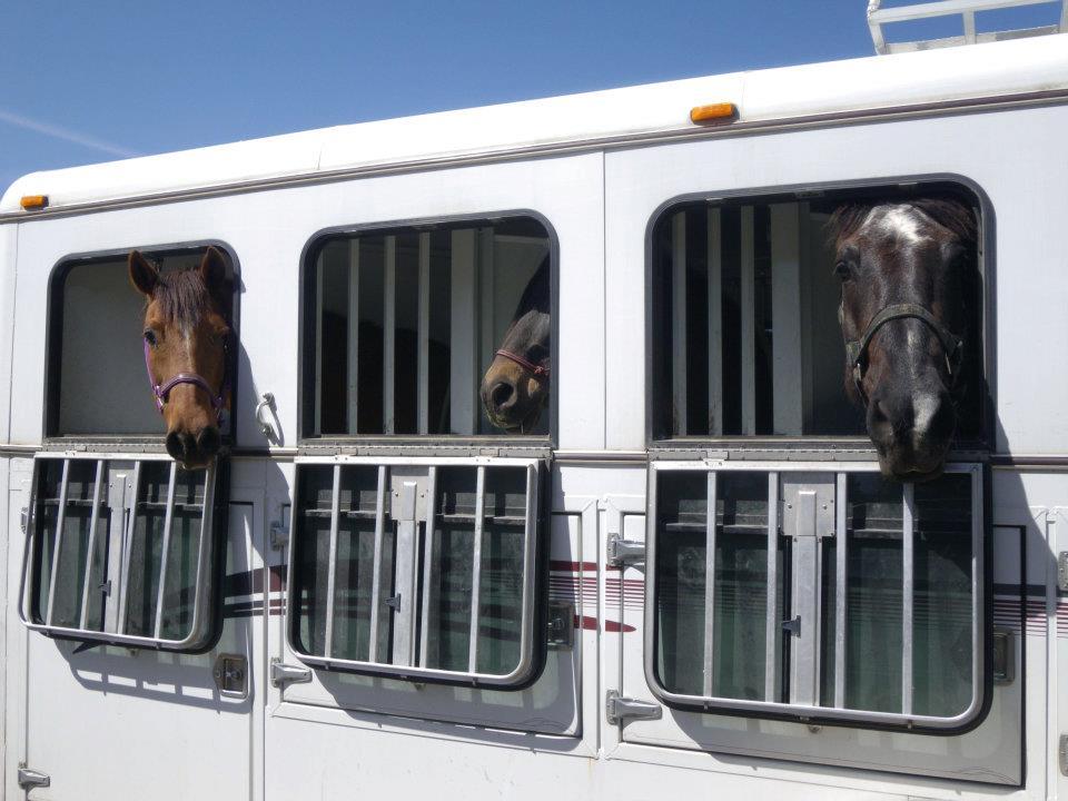 horses-in-trailer.jpg