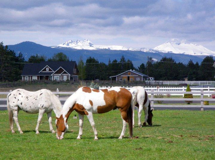 horses-in-beautiful-scenery.jpg
