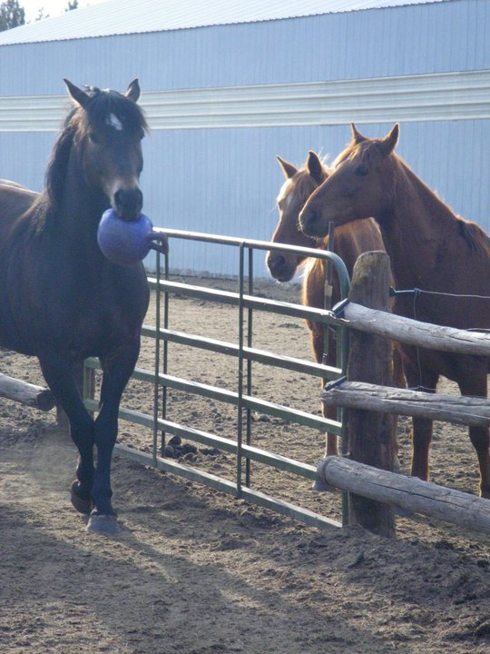 horse-with-ball.jpg