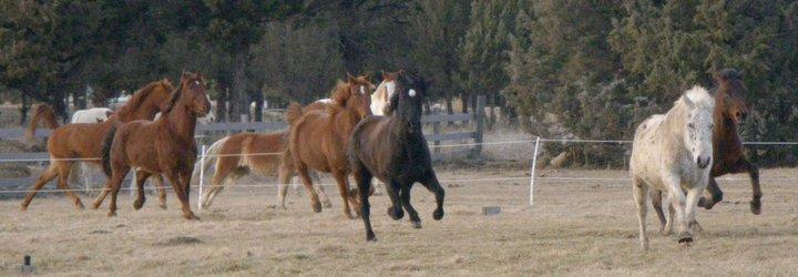 horses-running.jpg