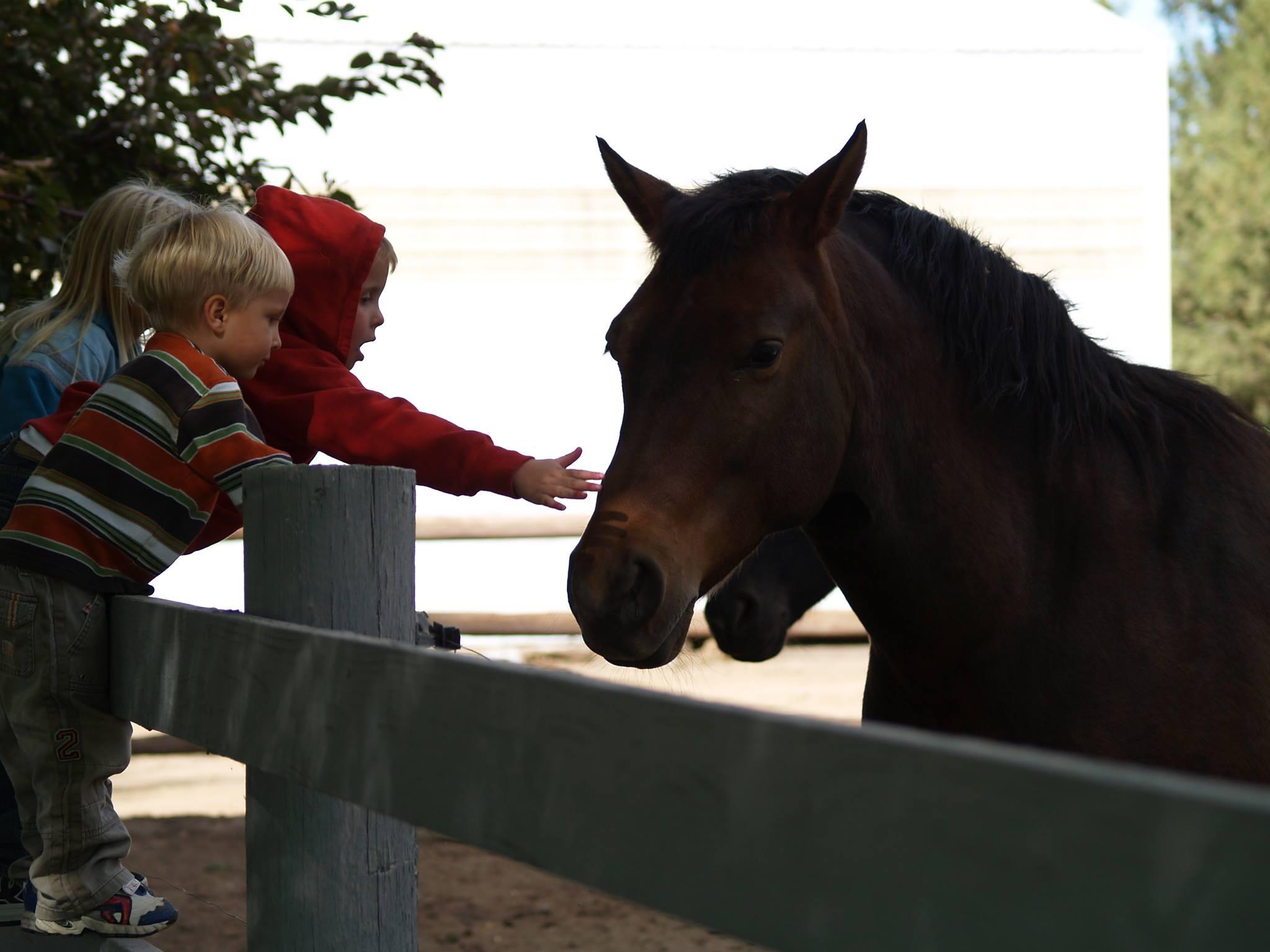 kids-petting-horse.jpg
