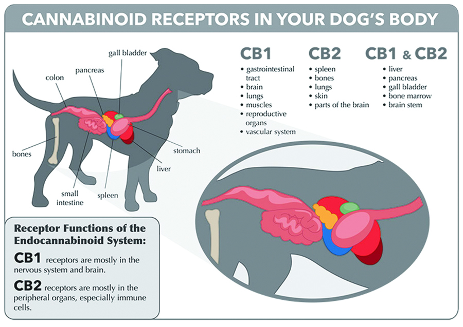 pet-dog-cat-endocannabinoid-receptors-body-1.jpg