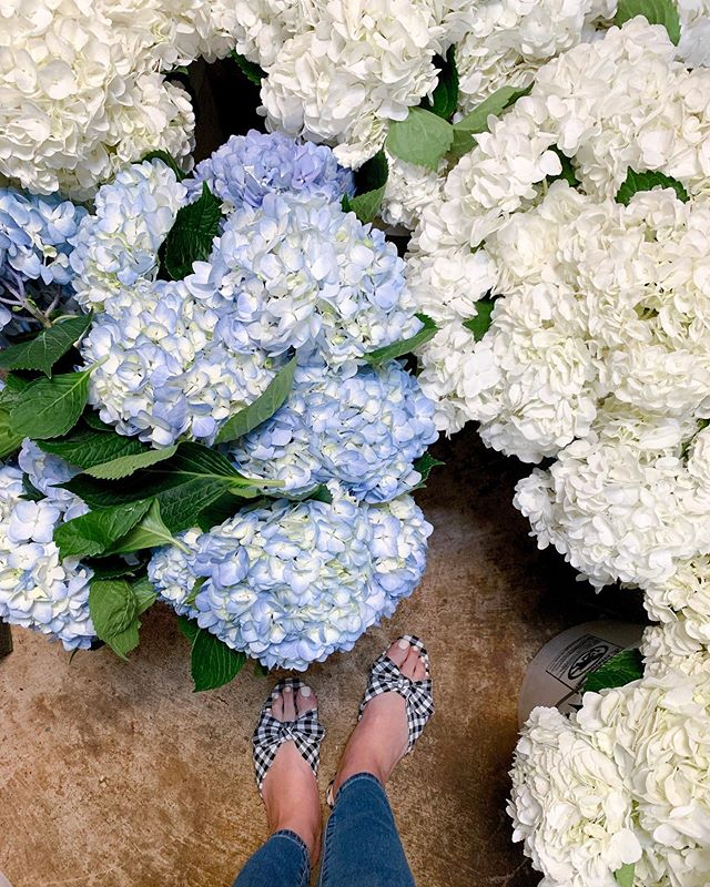 These are a few of my favorite things 💙 . . . p.s. This was the day we booked our florist and she happened to have a wedding that weekend using blue and white hydrangeas... H E A V E N 😍