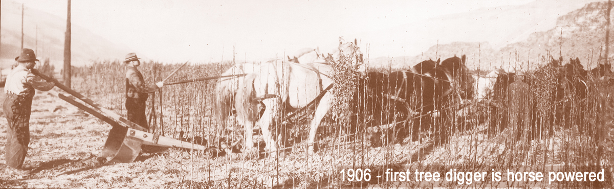 History - 1906 Tree digger with text.jpg