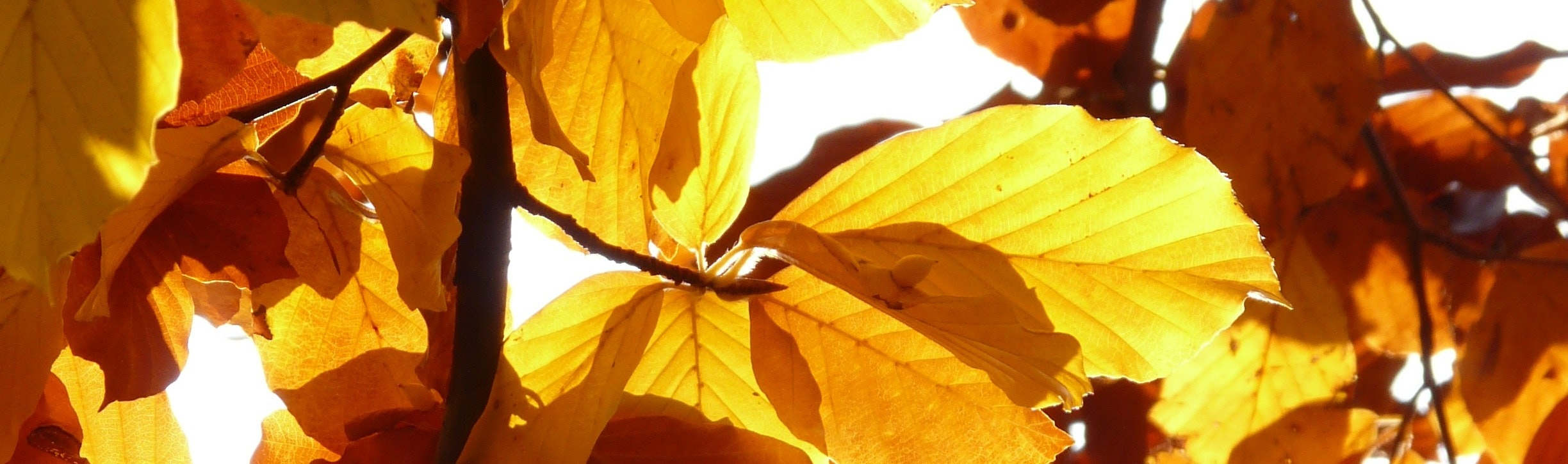 autumn-leaves-branch-close-up-65898.jpg