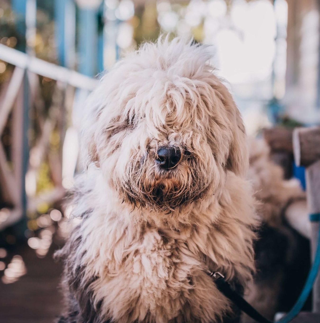 Winston - the Launceston X-Ray Dog in Newstead
