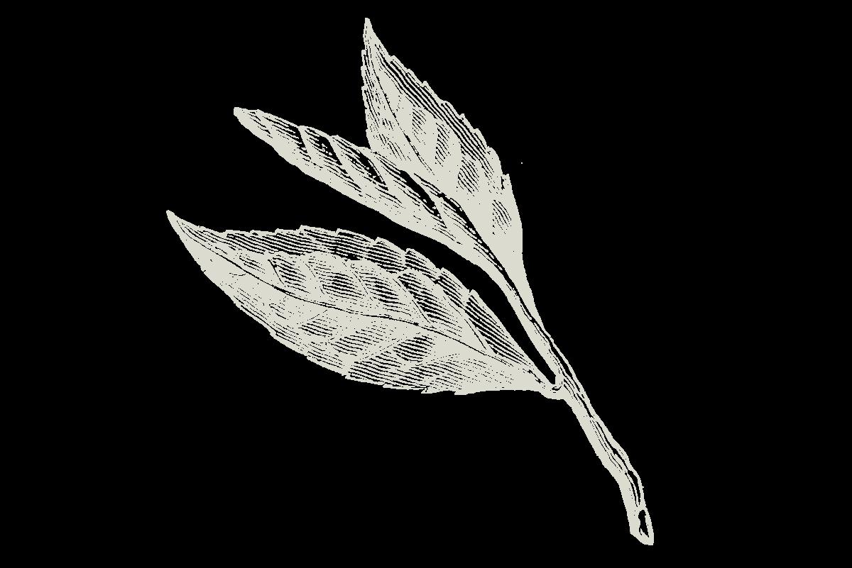 30-Keyes-Flower_4_1200x800.png