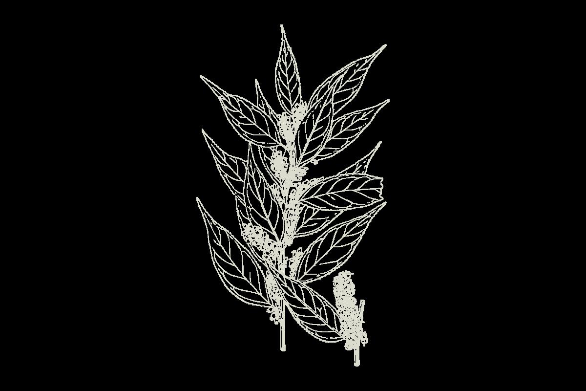30Keyes_Botanicals_UnitTypes_Solo_20180831.png