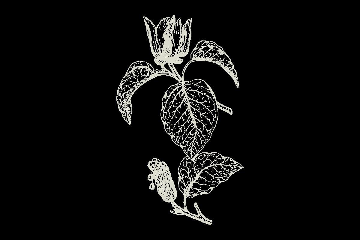 30Keyes_Botanicals_UnitTypes_Demi-Plus_20180831.png