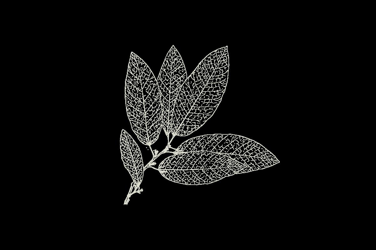 30Keyes_Botanicals_UnitTypes_Atelier_20180831.png