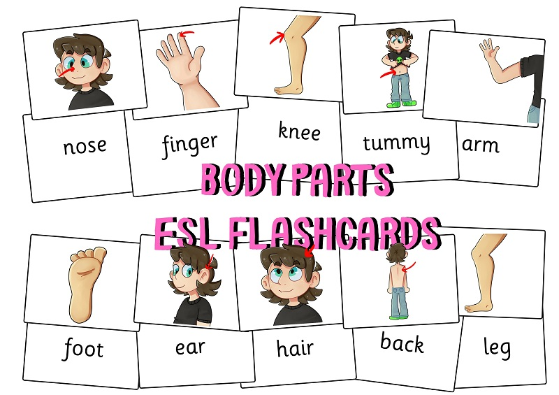 Body Parts Flashcard Images Set.jpg