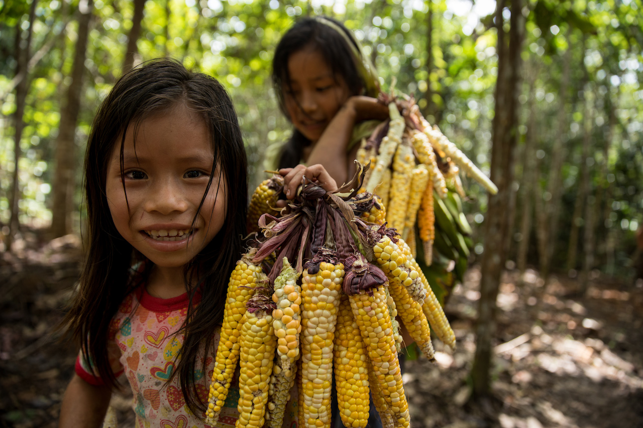 Girls carrying corn through the jungle on route back to the village.