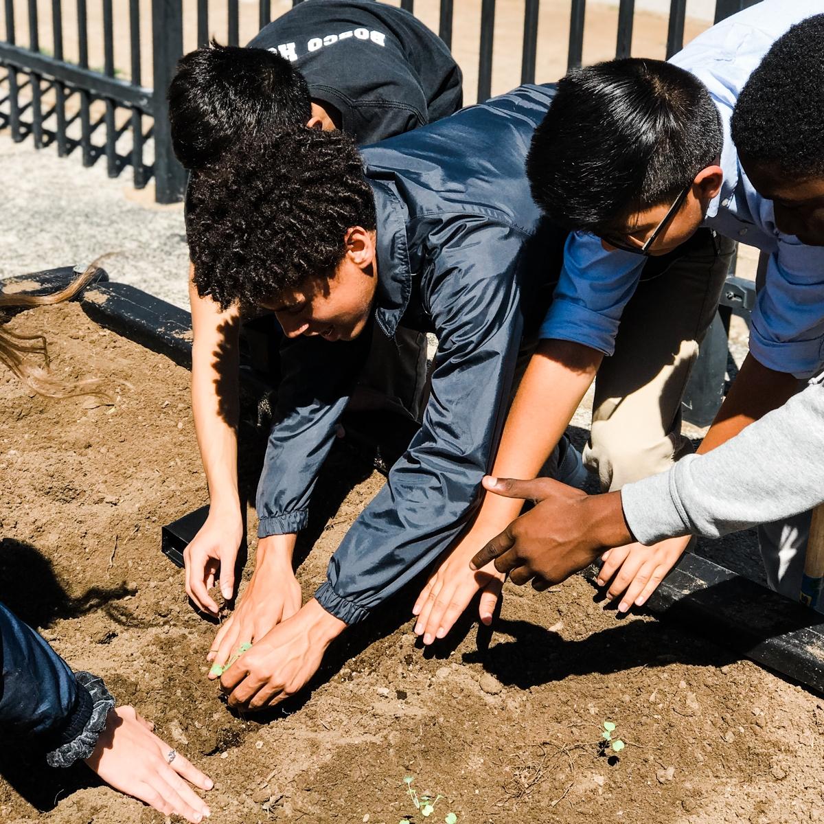 Donate to our Urban Garden -