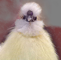 Snowball portrait.jpg