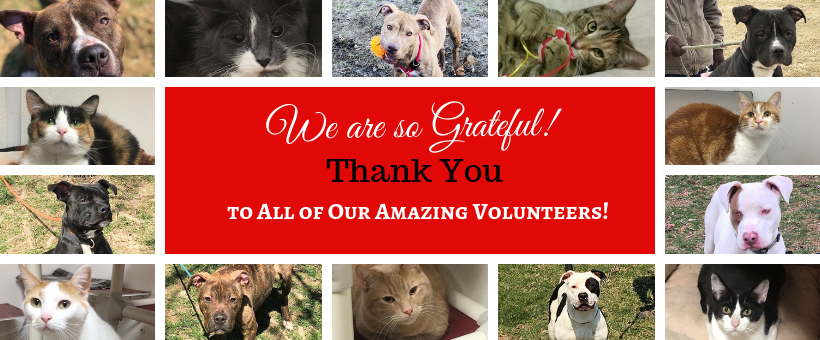 WEBSITE Thank you volunteers april 2019.png