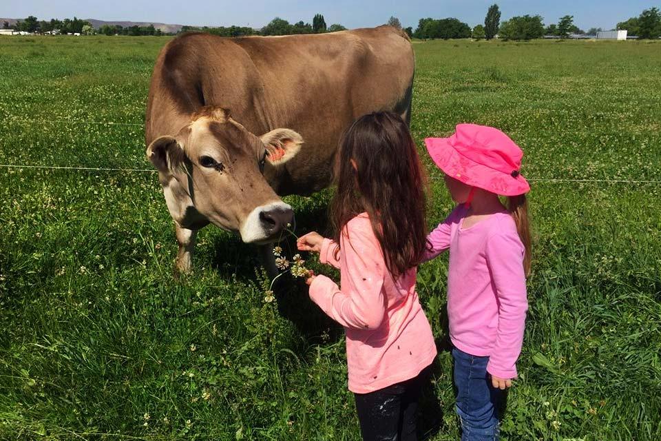 Grass Fed Organic Beef In Greater Boise Idaho Id Saint John S Organic Farm