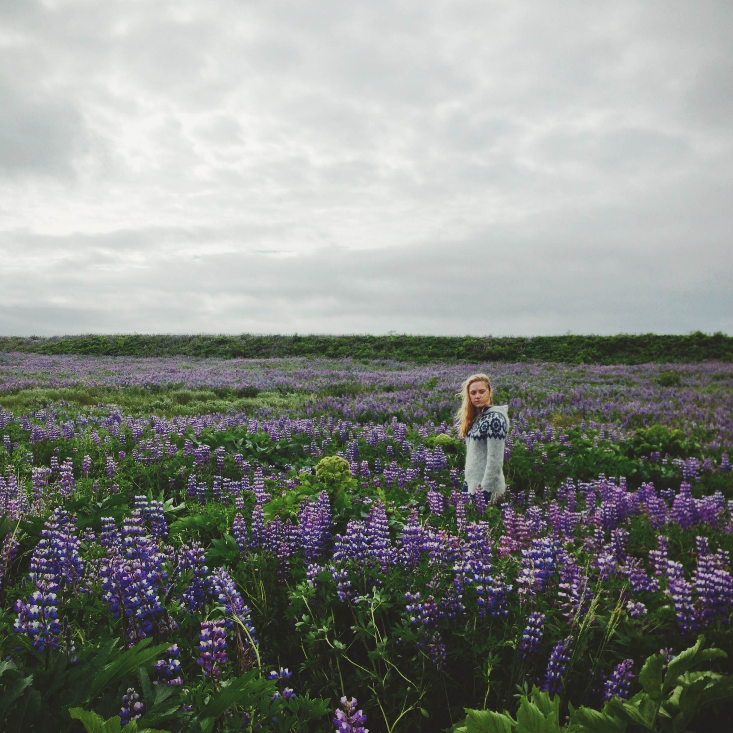 maika stands in a lupin field