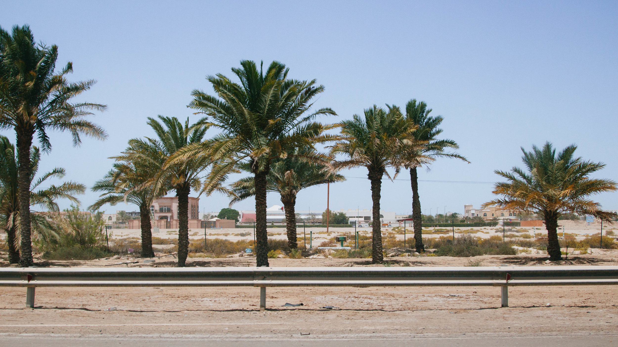 palm trees abu dhabi highway