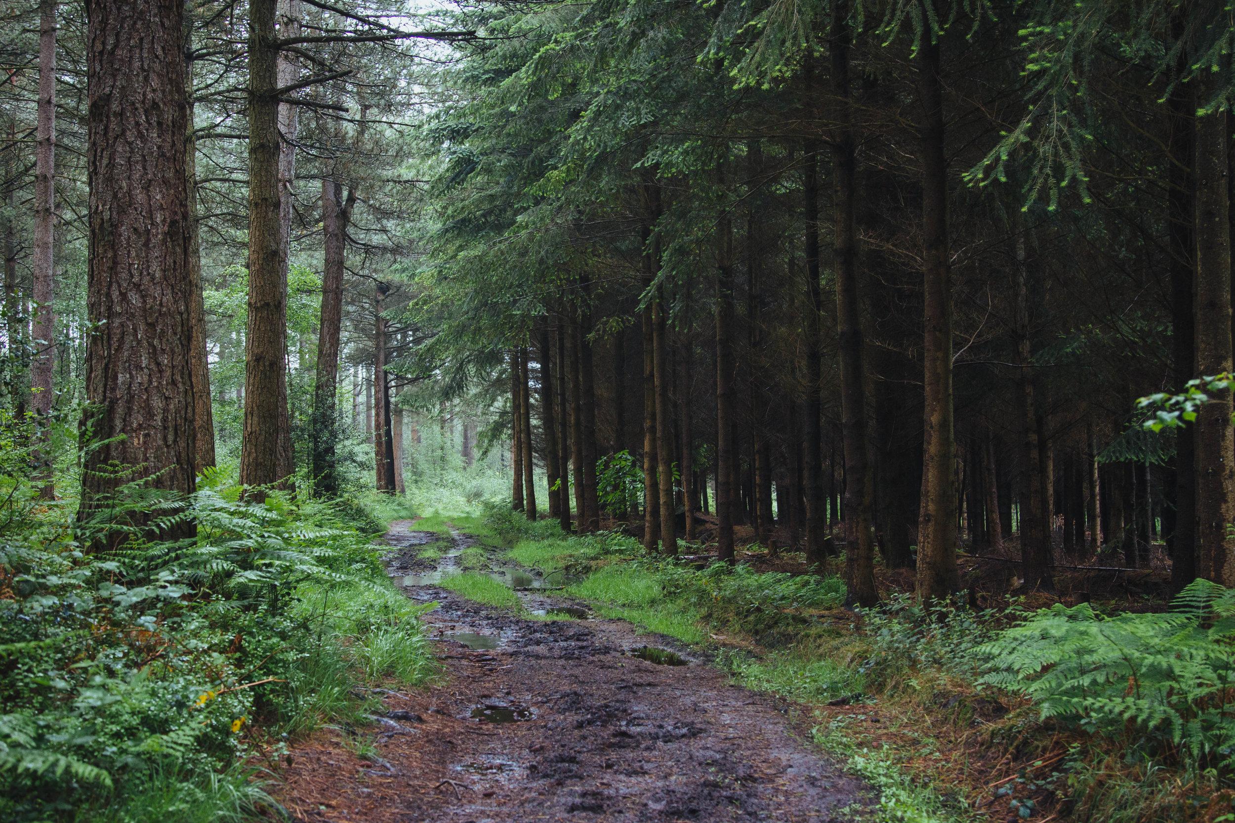 twilight movie forest