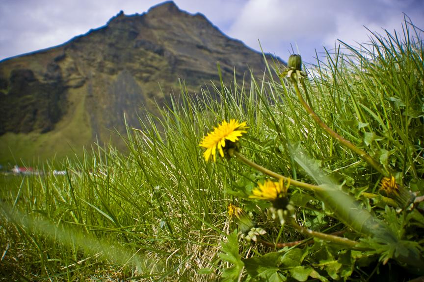 Iceland_4090.jpg
