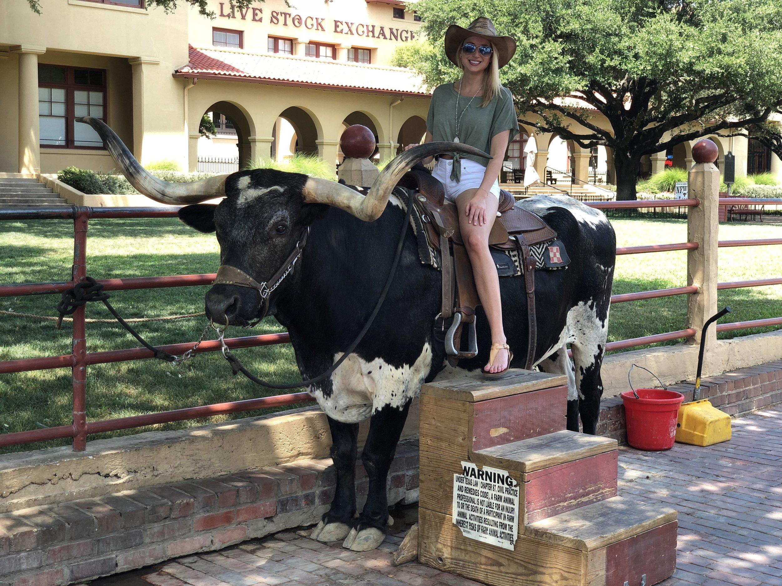 Bull at the Stock Exchange.jpg