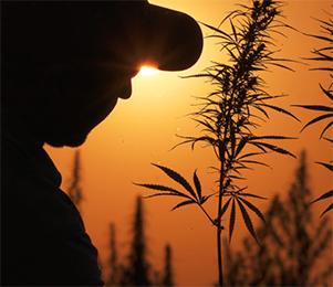 CannabisIndustryArticle.jpg