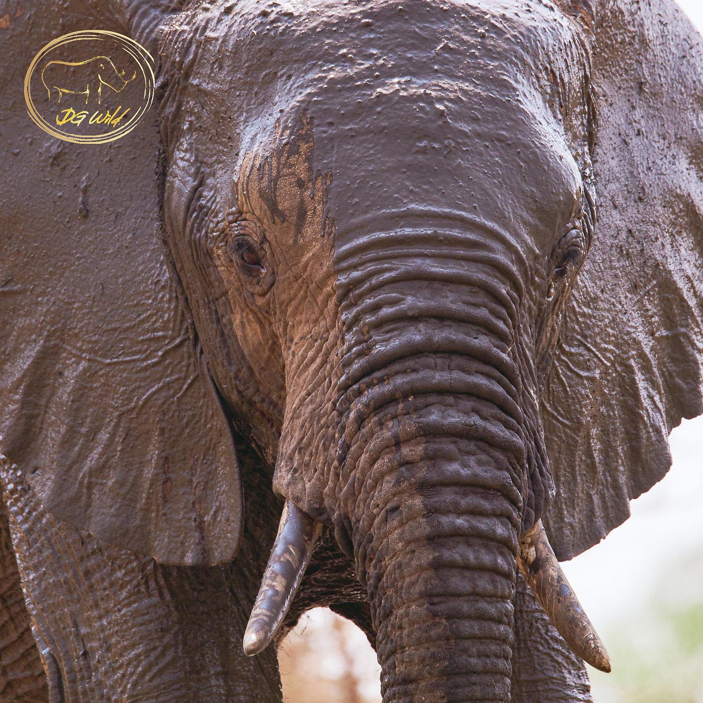 African Safari Compilation 2013-2018