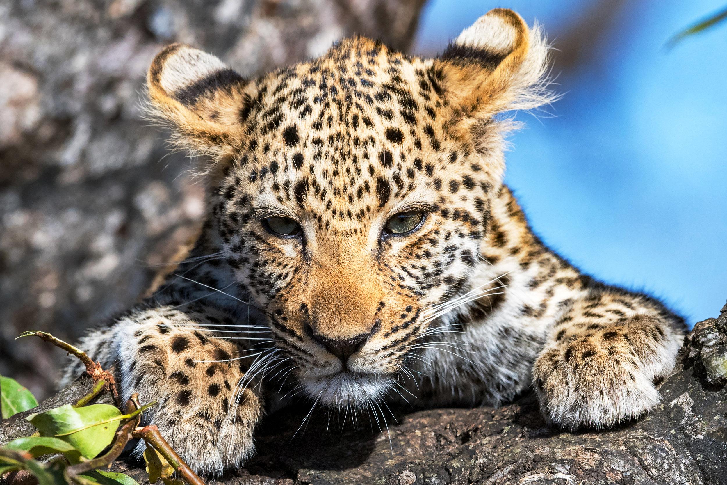 African Safari 2018
