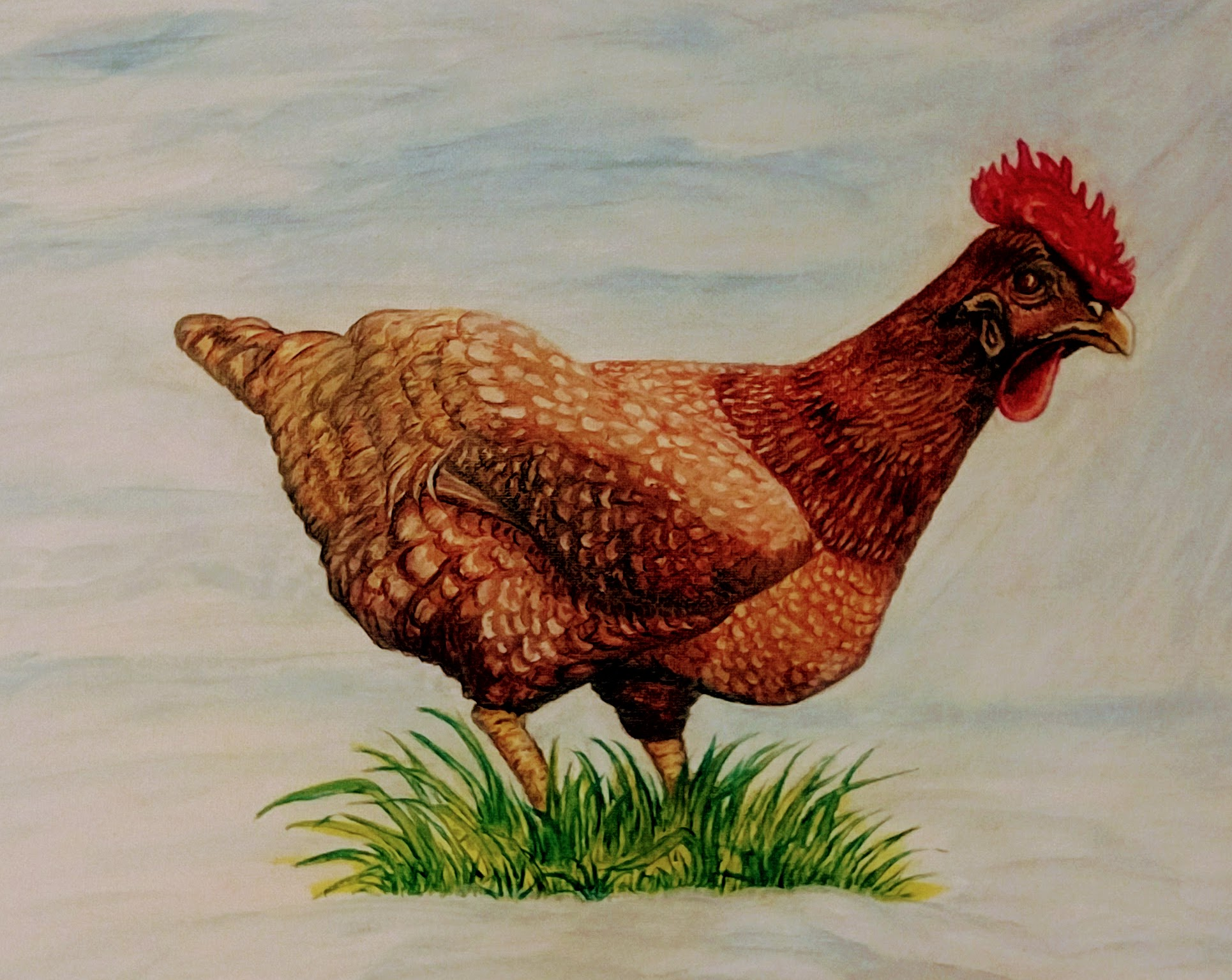 Chicken Pet Portrait.jpg