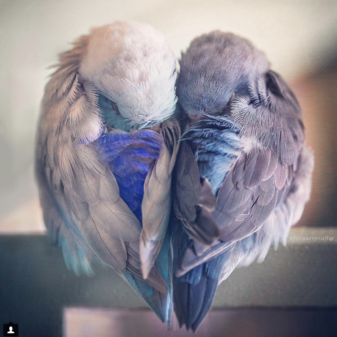 loyalty - a strong feeling of support or allegiance.*image from @freyaeverafter_
