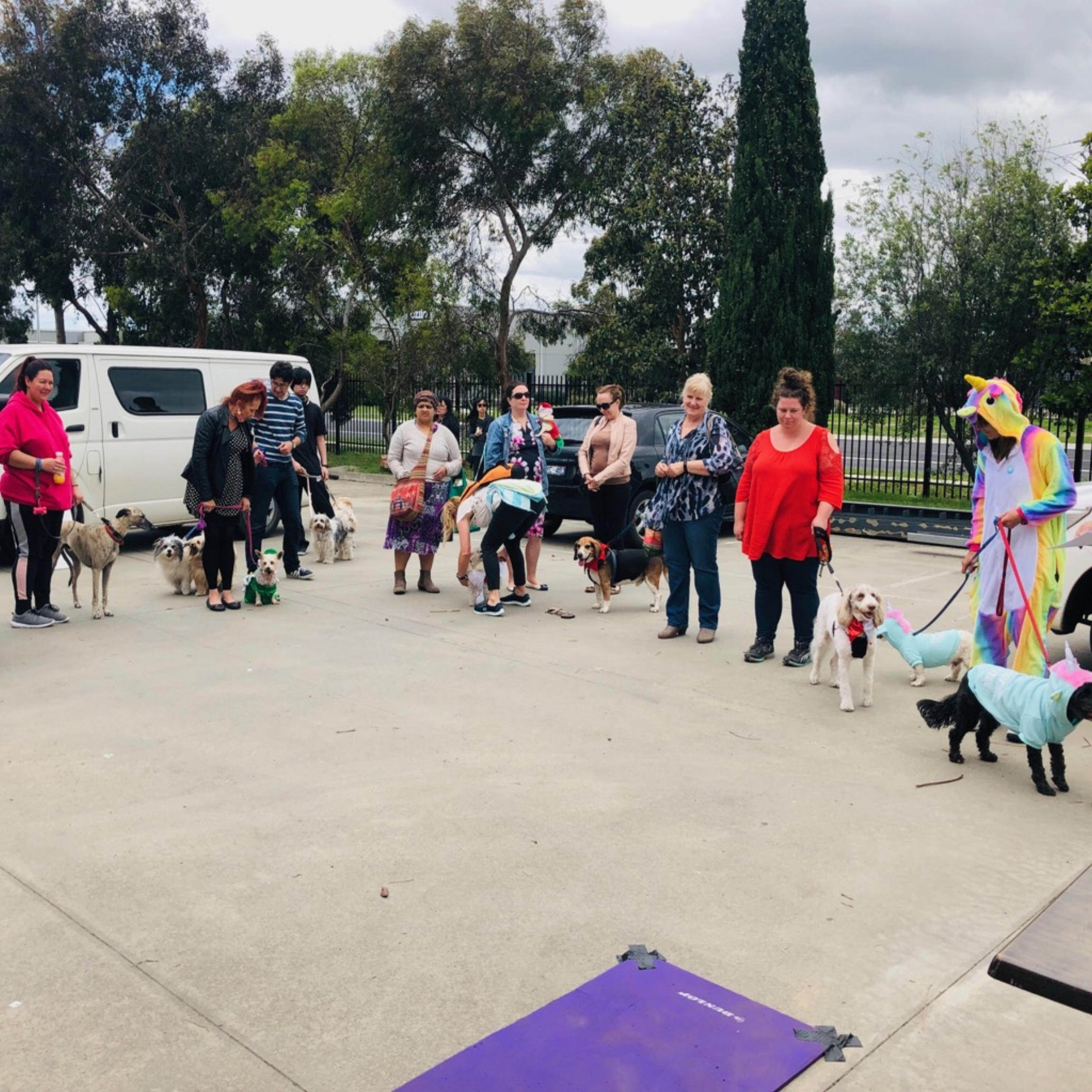 the dynamic doggy parade getting underway