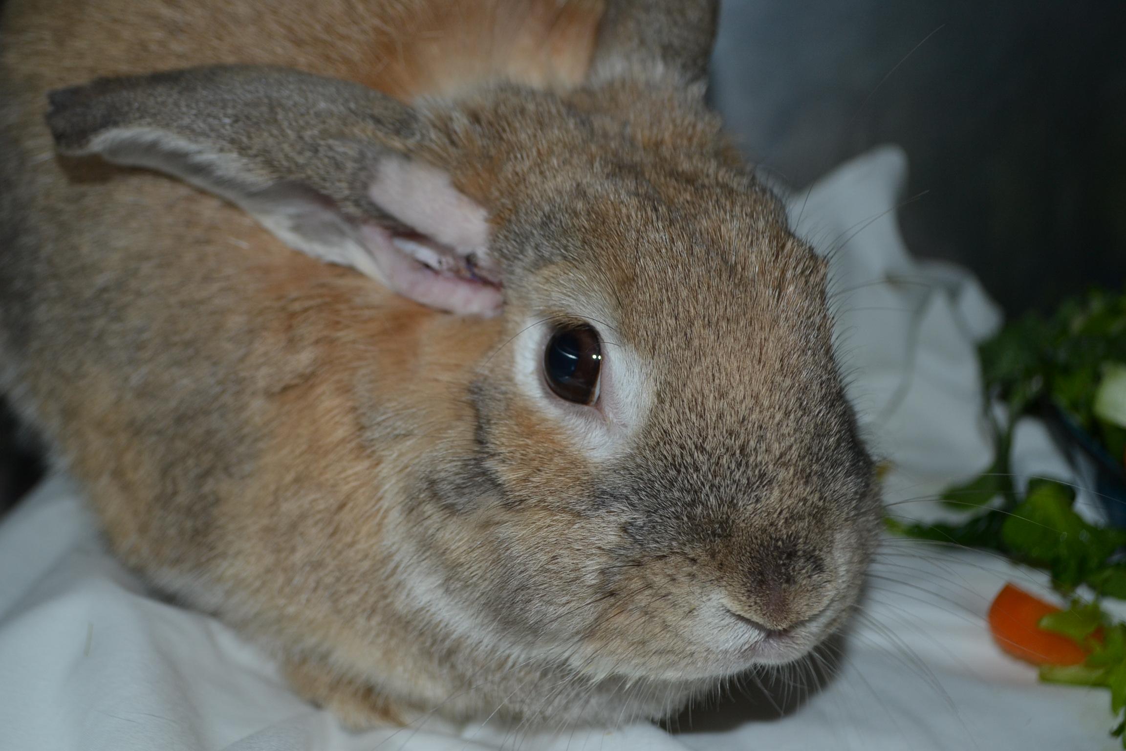 - Bunny Peanut