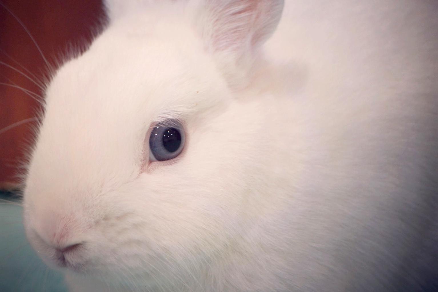 - Bunny Kara