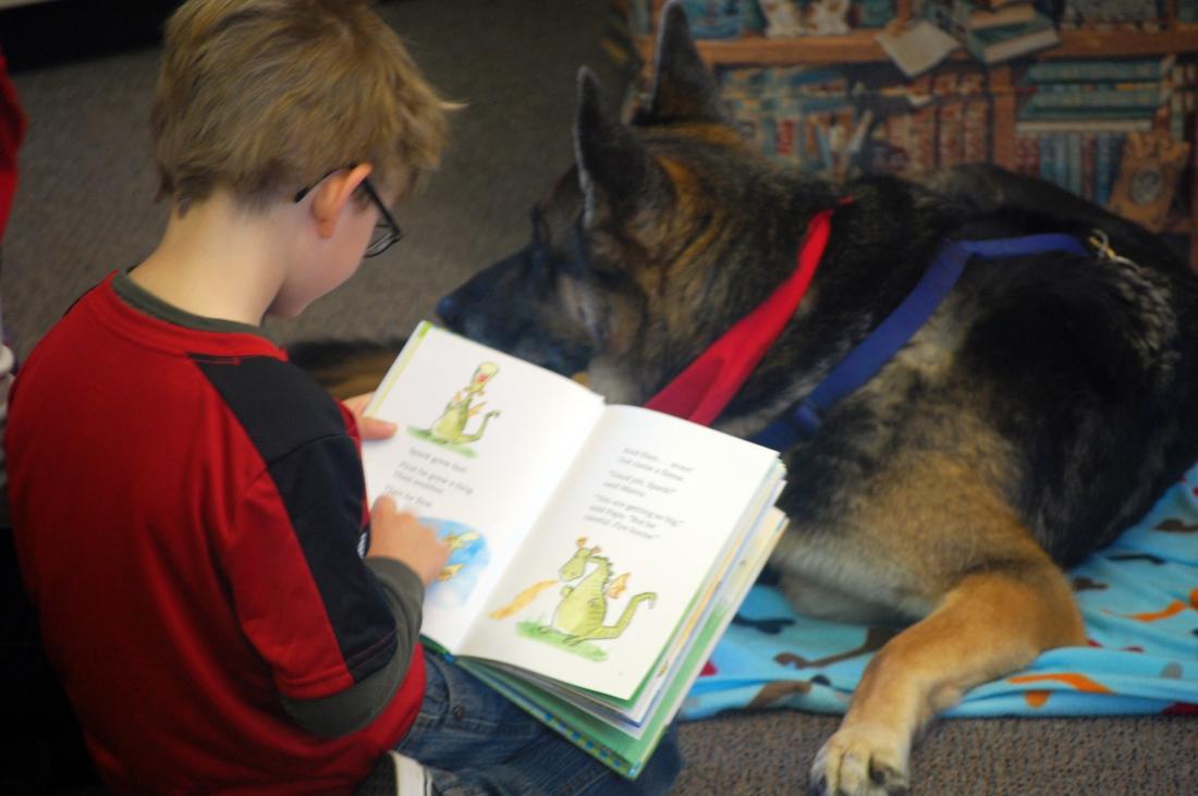 therapy-dog-trainer-north-carolina.jpeg