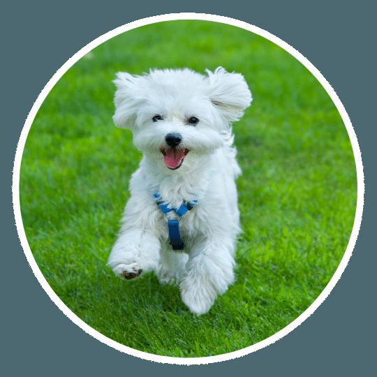 dog-behaviorist-asheville-nc.png