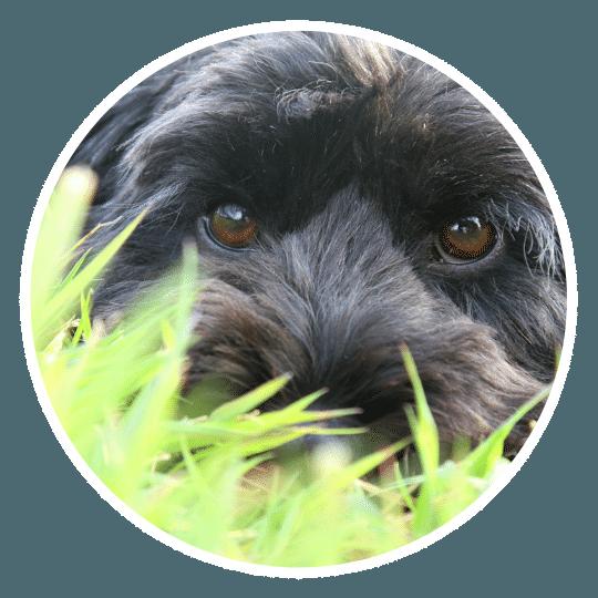 dog-trainer-in-asheville.png