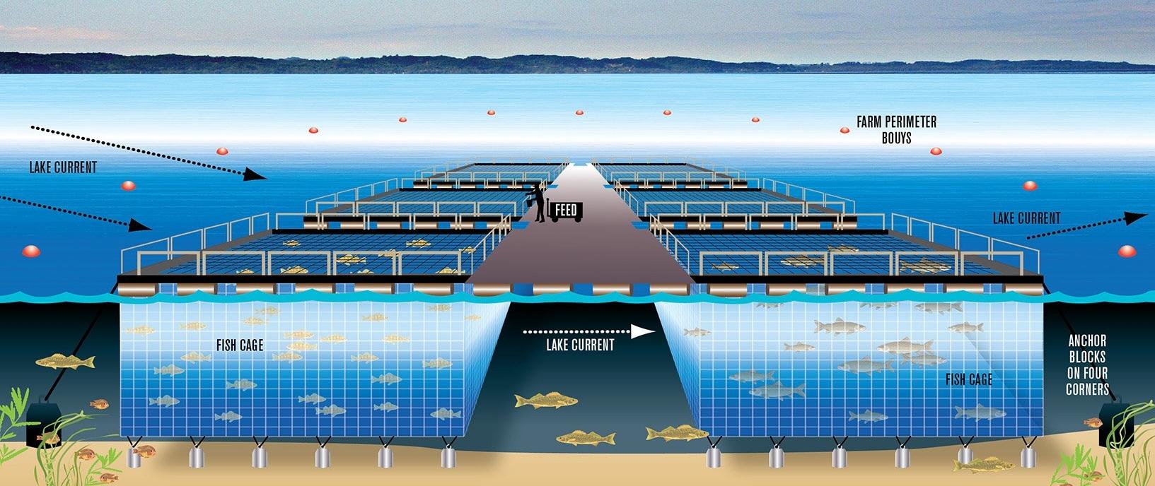 floating-fish-farms-sea-grant-mi.jpg