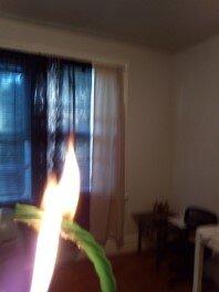 Green Twizzler Straw On Fire