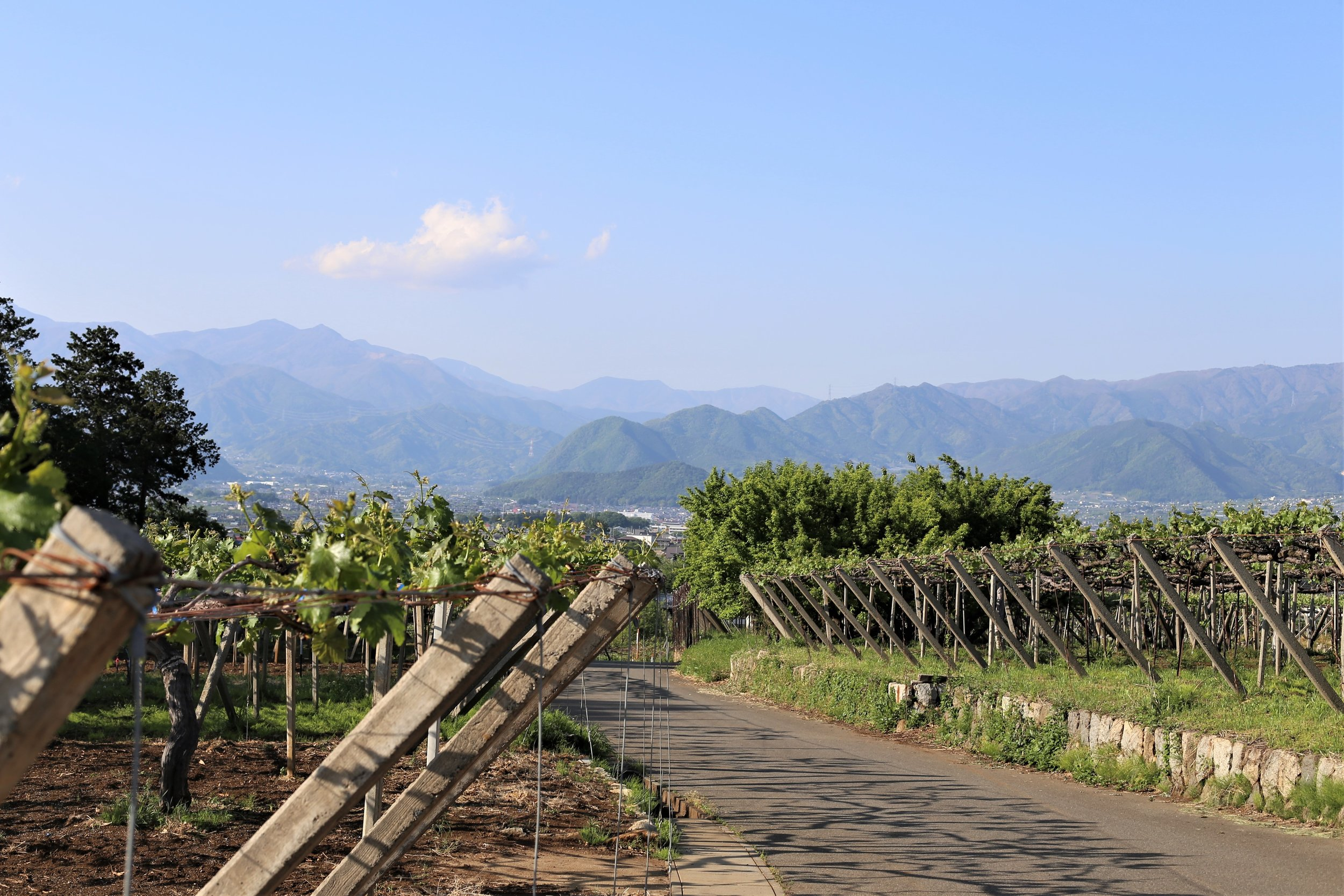 Koshu Valley_Japanese Wine Region_Spring vineyard view.JPG