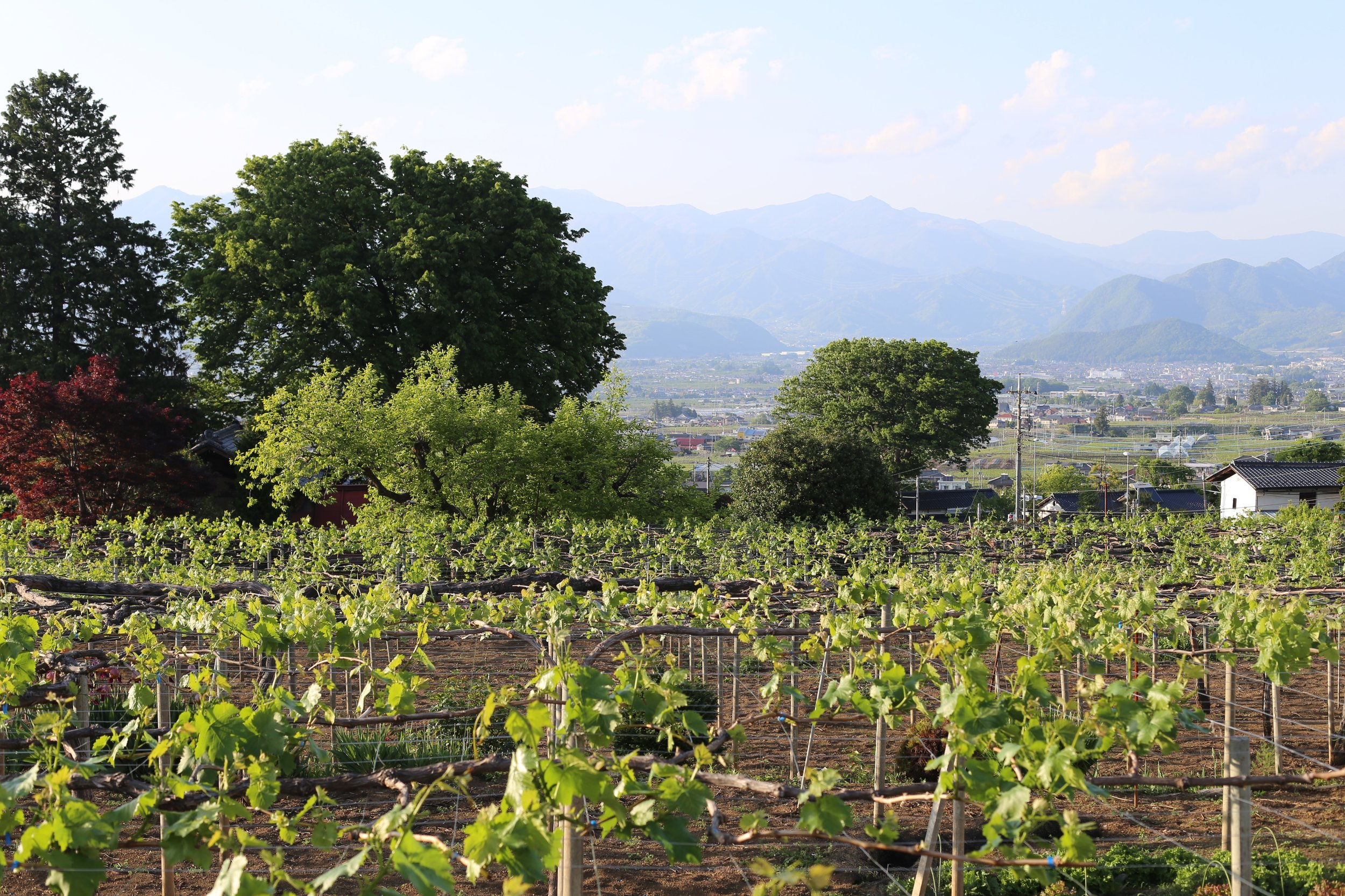 Koshu Valley_Japanese Wine Region_Spring.JPG