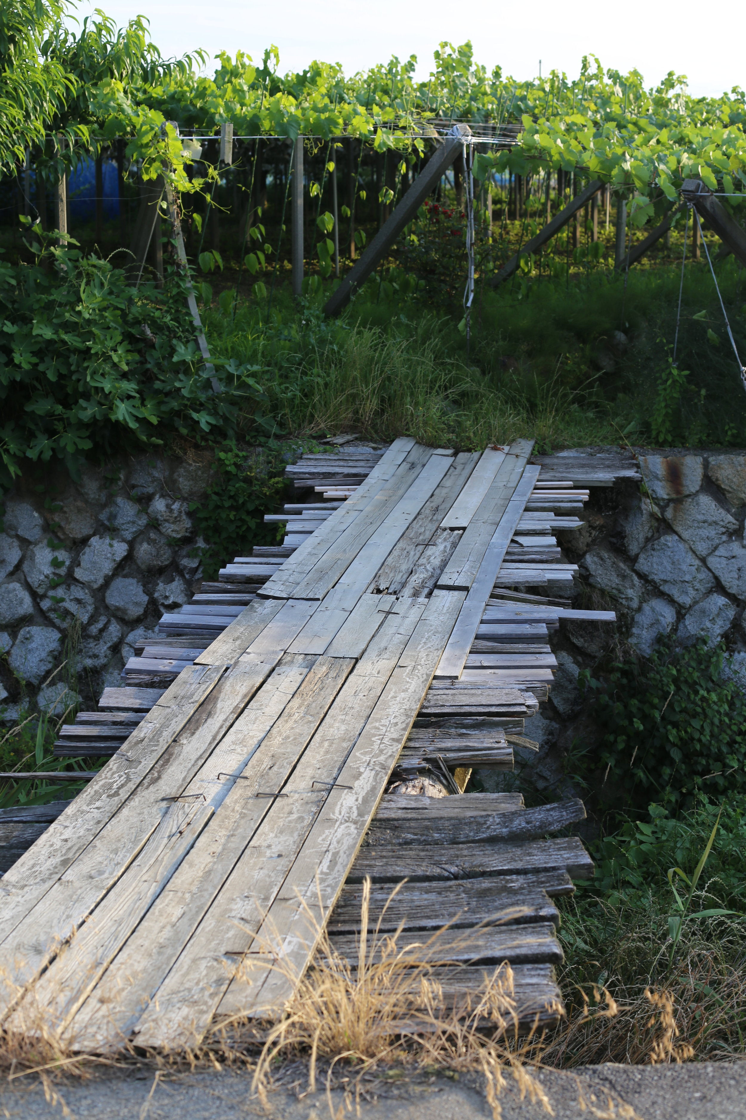 Koshu Valley_Japanese Wine Region_Pergola vineyard_Wooden bridge.JPG