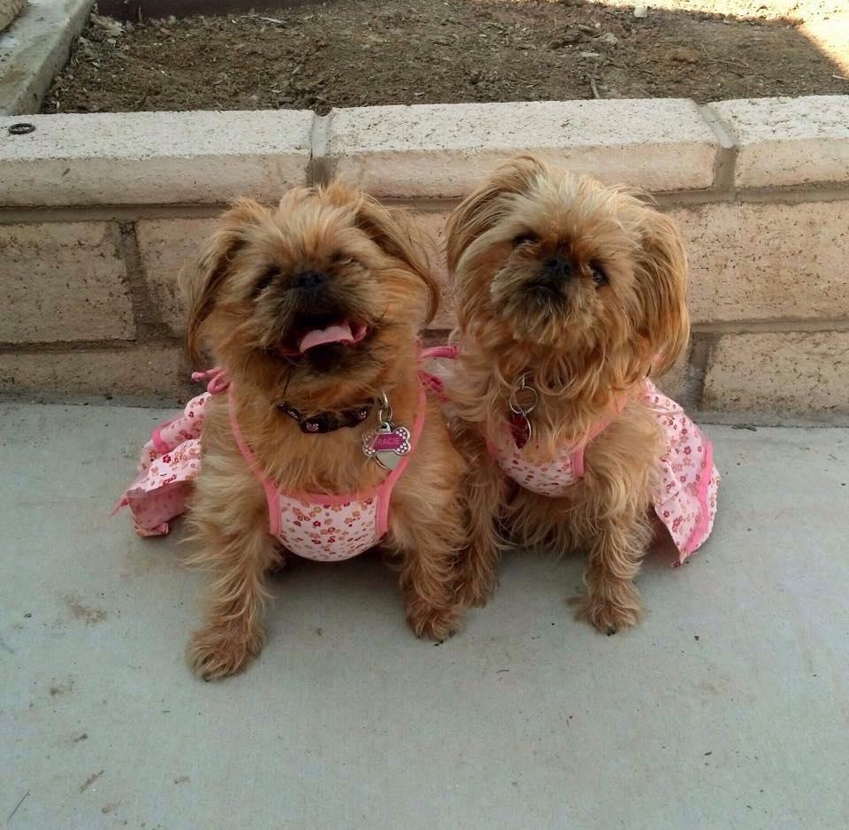 Kia and Gracie.jpg