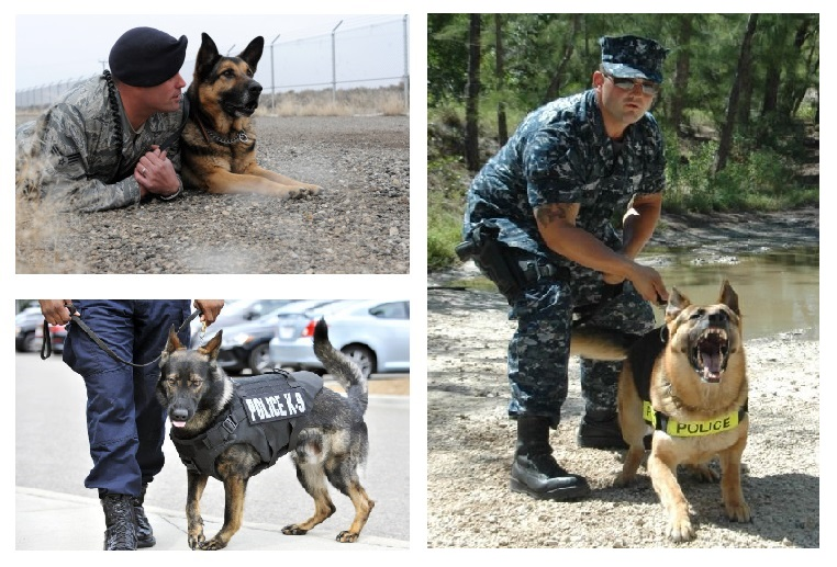 Make your donation recurring for our service dogs.