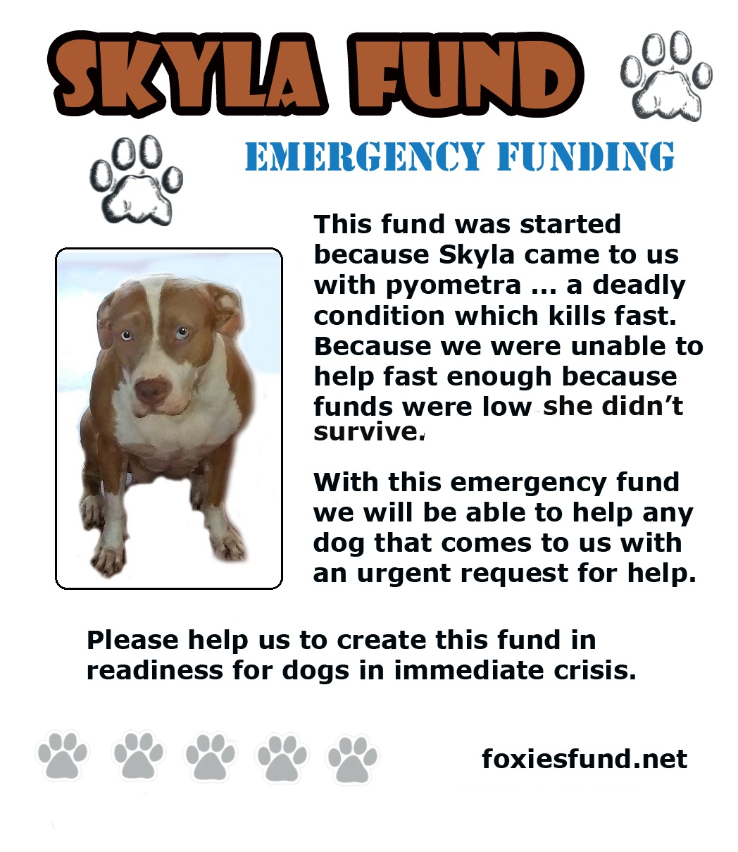With the Syla Fund, dogs will also have a neuter/spade done as well. This will prevent any future risk of developing Pyometra. Help critical needs dogs survive urgent requests for help. Donate to the Skyla fund today.