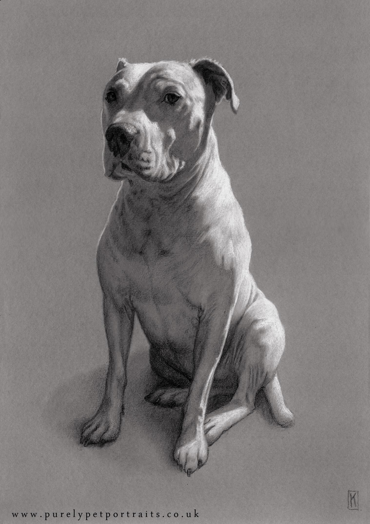 Portrait of Boycee by www.purelypetportraits.co.uk