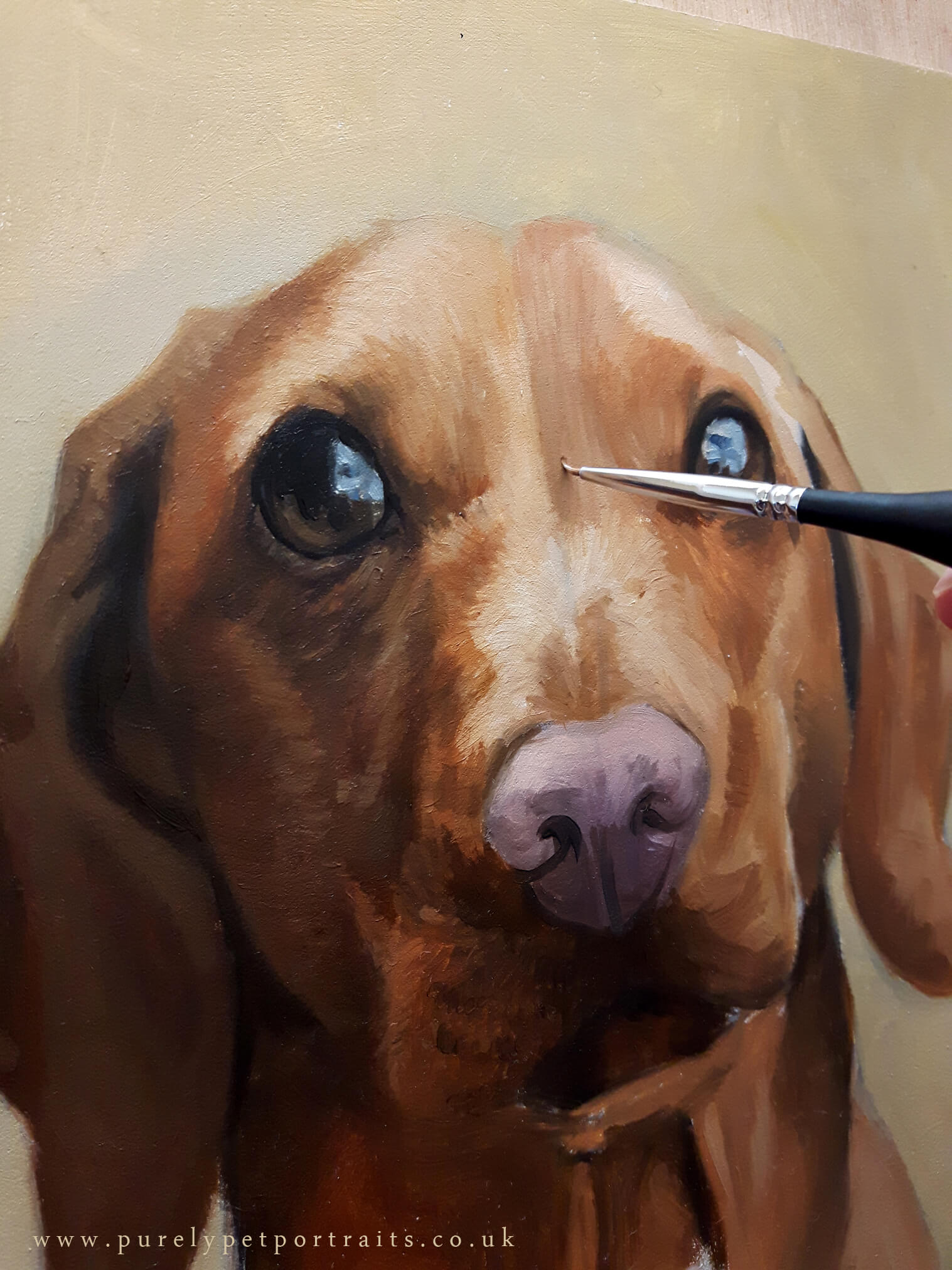 POrtrait of Barnaby by www.purelypetportraits.co.uk