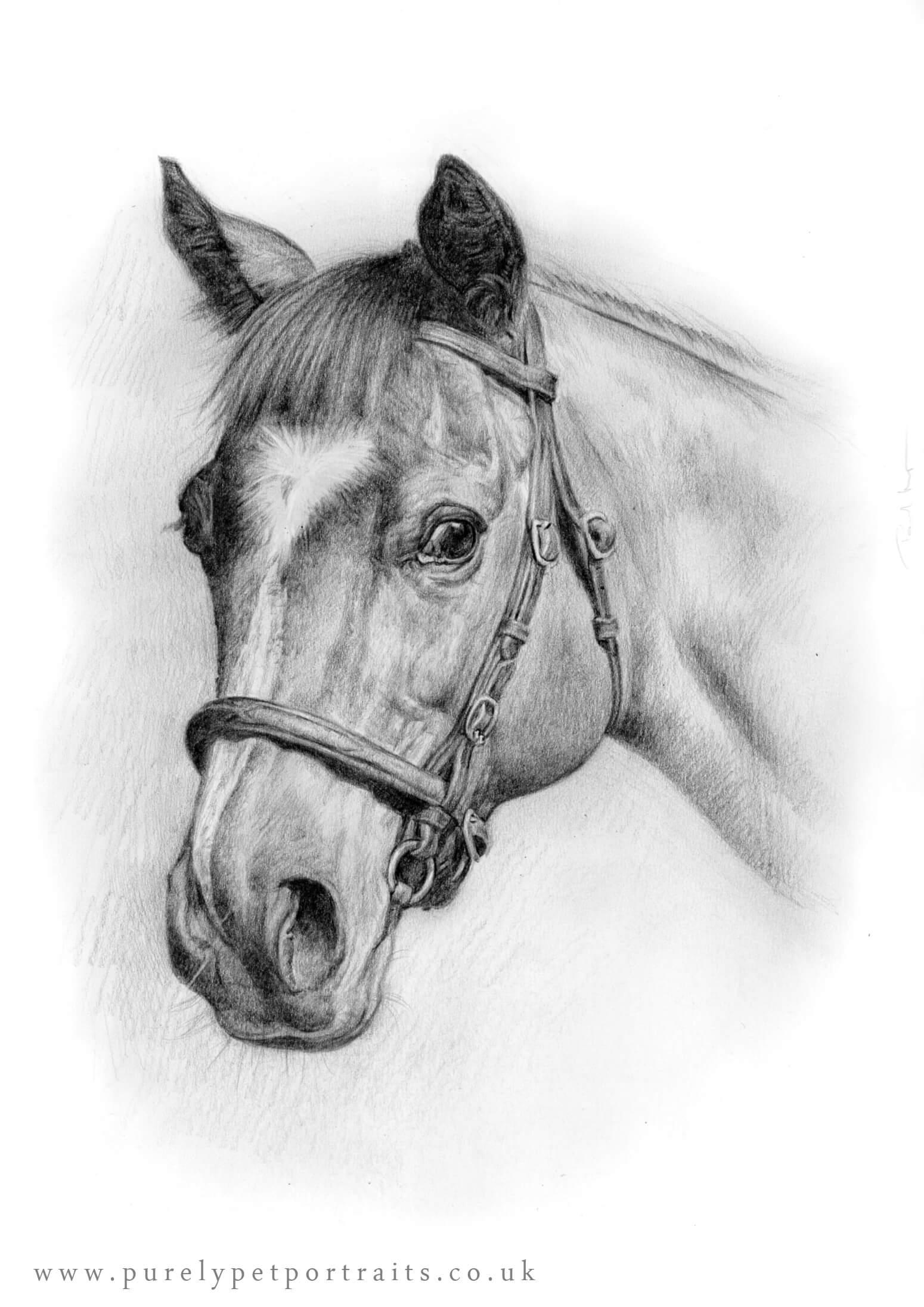 Horse portrait by Paul Moyse www.purelypetportraits.co.uk