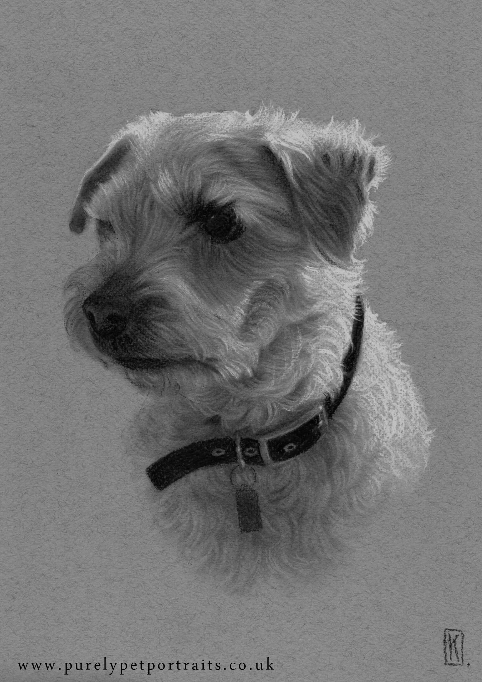 portrait of Rusty by www.purelypetportraits.co.uk
